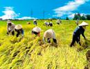 Vay sản xuất nông nghiệp