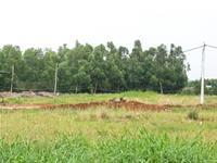 Sử dụng đất có hiệu quả mới được cấp giấy chứng nhận