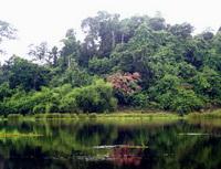 Bình Phước: Di dời 78 hộ dân ra khỏi Vườn Quốc gia Cát Tiên