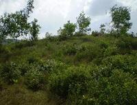 Tây Ninh: Thu hồi 2.700 ha đất sử dụng sai mục đích để trồng lại rừng