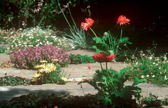Vườn bê tông