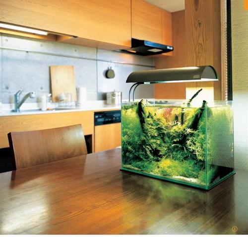 Kiêng kỵ khi đặt bể cá cảnh trong nhà