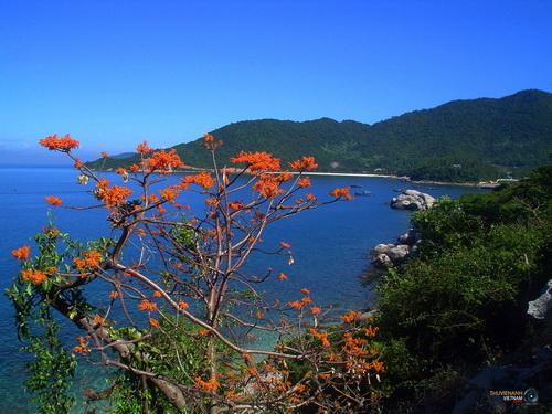 Cù Lao Chàm - Vẻ đẹp tiềm ẩn