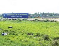 Vĩnh Long: Hạ năng suất lúa, lấy đất làm khu công nghiệp