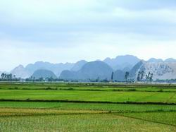 Giải quyết vướng mắc khi cấp Giấy CNQSDĐ ở tỉnh Quảng Trị