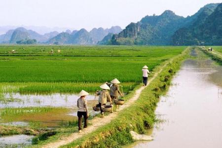 Mở rộng đối tượng miễn, giảm thuế sử dụng đất nông nghiệp