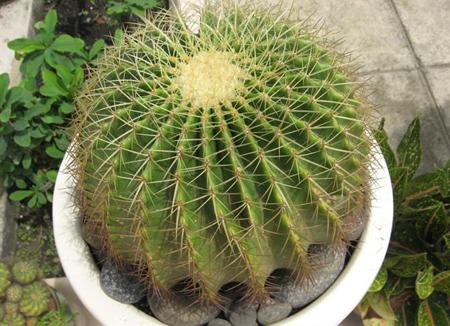 09 091211DOOLThangPT01 Những loại cây có tác dụng hóa giải ở ban công nhà