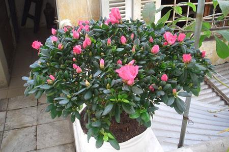 09 091211DOOLThangPT02 Những loại cây có tác dụng hóa giải ở ban công nhà