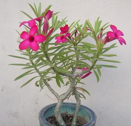 09 091211DOOLThangPT03 Những loại cây có tác dụng hóa giải ở ban công nhà