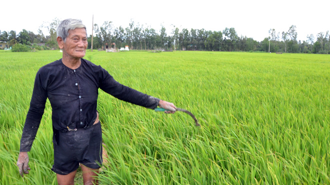 Trả đất cho dân trồng lúa