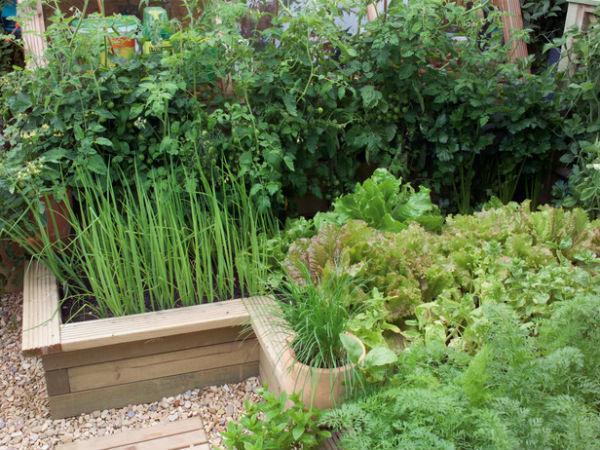 Vườn rau đẹp xinh trong nhà phố
