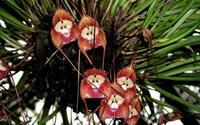 6 loài hoa giống động vật một cách kì lạ