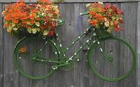 Xe đạp tồi tàn mà bừng sáng cả không gian