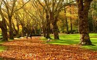 Quyến rũ bức tranh mùa thu nước Mỹ