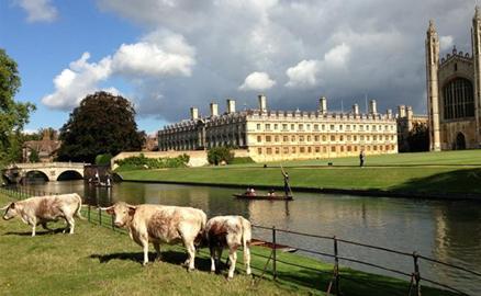 Thăm Trường Đại học Cambridge
