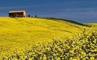 Ở những nơi có mùa xuân đẹp nhất thế giới