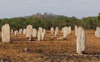 Nghĩa địa mối khổng lồ ở Australia
