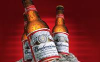 6 dòng bia đẳng cấp nhất hành tinh