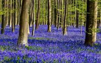 Lạc giữa khu rừng cổ tích đẹp mê hồn ở Bỉ