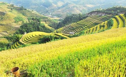 Vẻ đẹp mùa vàng Lào Cai