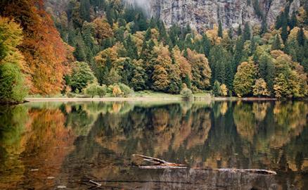 Khám phá Black Forest – khu rừng đen huyền bí ở Đức