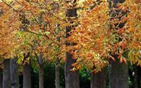 Đẹp nao lòng vườn Thu Luxembourg