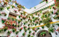 Lễ hội treo hoa ở Cordoba