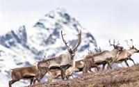 Cảnh thiên nhiên hoang dã đẹp sững sờ ở Alaska