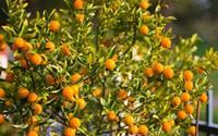 Những loại cây cảnh mang lại điềm may trong năm mới