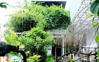 """Nhà vườn """"thẳng cánh cò bay"""" của Giang Còi"""