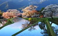 Chiêm ngưỡng sắc hoa anh đào Nhật Bản