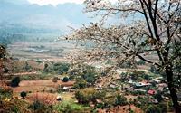 Vẻ đẹp của hoa ban và ruộng lúa Tây Bắc mùa xuân