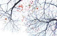 Khúc giao mùa tháng 3 của hoa Hà Nội