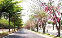 Những con đường Sài Gòn rợp bóng hoa