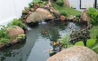 Chọn phương vị và hình dáng cho hồ nước trong sân vườn