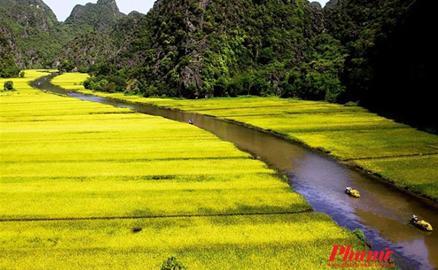 Tam Cốc vàng ươm mùa lúa chín