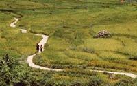 Ruộng bậc thang Sa Pa mơ màng trong nắng đầu thu