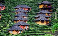 Ngôi làng trên đồi chè đẹp như bích họa ở Thái Lan