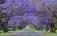 Những con đường đẹp như thơ và nhạc