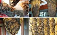 Độc đáo bảo tàng ong tại Tây Ban Nha