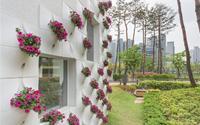 Vườn hoa đặc biệt 'đậu' trên tường nhà