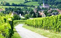 Mê hoặc con đường rượu vang vùng Alsace