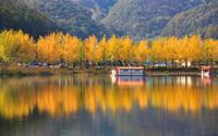 Cây ngân hạnh 'nhuộm vàng' mùa thu Hàn Quốc