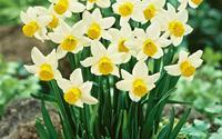 9 loại hoa đẹp, mang lại may mắn nên chưng trong dịp Tết