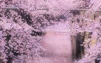 Mùa hoa anh đào nở rộ khắp thế giới khiến du khách chỉ biết ngất ngây