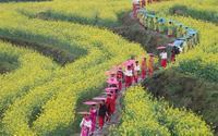Hoa xuân đua sắc khắp Bắc bán cầu