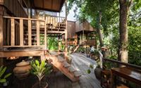 Gia chủ chờ 30 năm để vườn thành rừng rồi mới xây nhà
