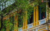 """Có một mùa """"chua chua ngọt ngọt"""" ở Sài Gòn: Mùa lá me bay gợi đầy ký ức"""