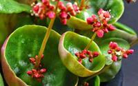 8 loại cây cảnh siêu nhỏ nhưng có hình dáng vô cùng ấn tượng khiến ai nhìn cũng muốn trồng