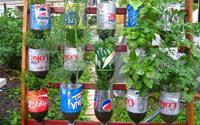 Mách bạn cách trồng rau xanh ngay trong nhà phố mà vẫn đảm bảo chất lượng và số lượng